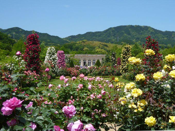 """ブローニュの森にある""""世界で最も美しいバラ園""""を再現!"""
