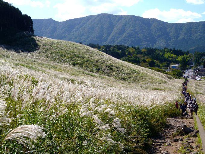 すすき草原に似合うのは、青い空と太陽の光!