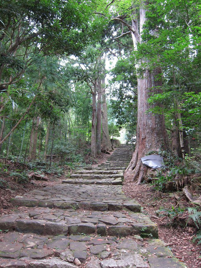 初心者でも歩きやすい!熊野古道「中辺路ルート」