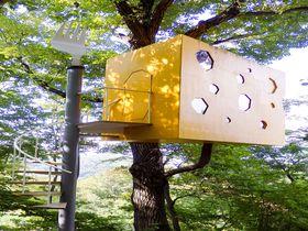 クリエイターデザイン!長野の自然と調和するアートなツリーハウス