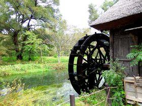 無料でたっぷり遊べる!大王わさび農場は安曇野一のレジャースポット|長野県|トラベルjp<たびねす>