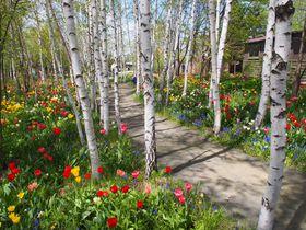 絵本のような可愛い庭が広がる旭川・上野ファームで妖精を探そう!|北海道|トラベルjp<たびねす>