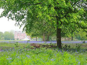 ロンドン「オスタリーパーク」イングリッシュブルーベルの群生地