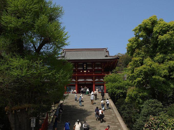 鎌倉観光は源頼朝ゆかりの「鶴岡八幡宮」からスタート