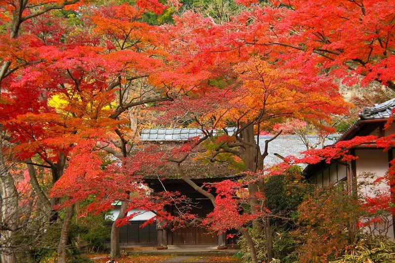 四季折々の顔が美しい!紫陽花の時期だけではない鎌倉「円覚寺」の魅力に迫る!