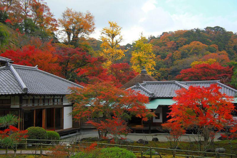 必訪!季節限定で週末限定の穴場紅葉スポット!鎌倉「長寿寺」