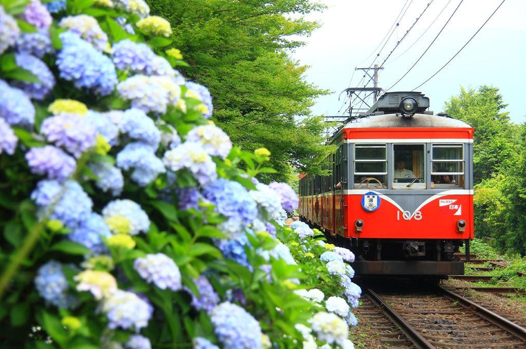 梅雨の時期必見!紫陽花と「箱根登山鉄道」撮影ベスト撮影地まとめ