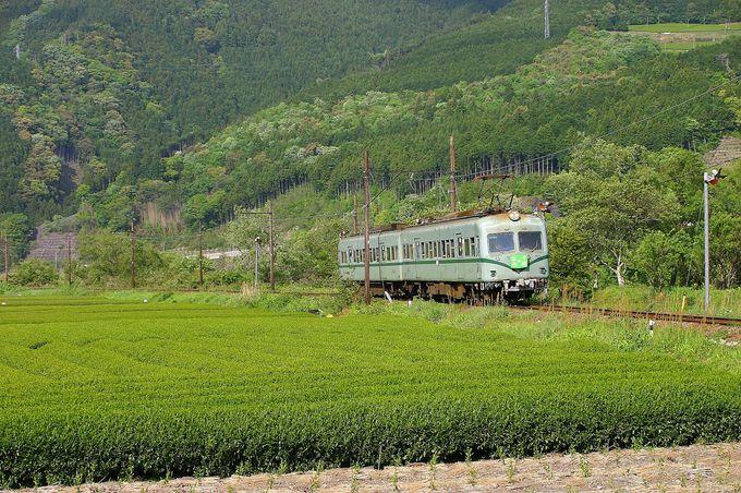 「抜里駅手前」の茶畑、駅前は茶畑「抜里駅」、花が咲き乱れる「地名駅」