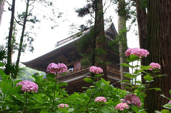 紫陽花が咲く一番メジャーな「夏」