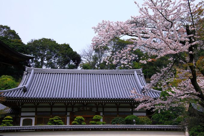 鎌倉五山第二位にして四季折々の顔が美しい「円覚寺」