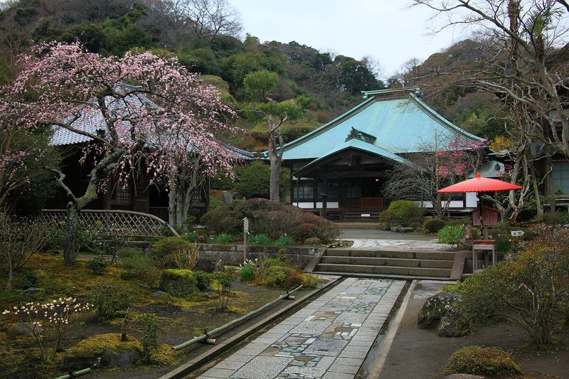 四季折々に咲く花の種類は半端ない!花の寺、海蔵寺の魅力に迫る!