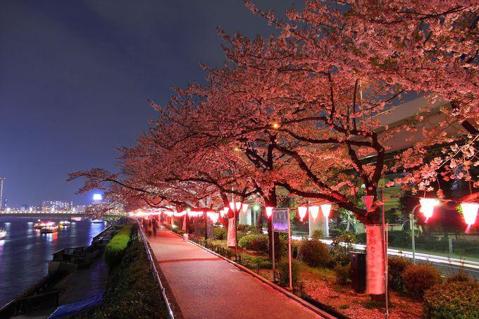 花見の時期の夜桜ライトアップ時は綺麗な水辺と化する「隅田公園」
