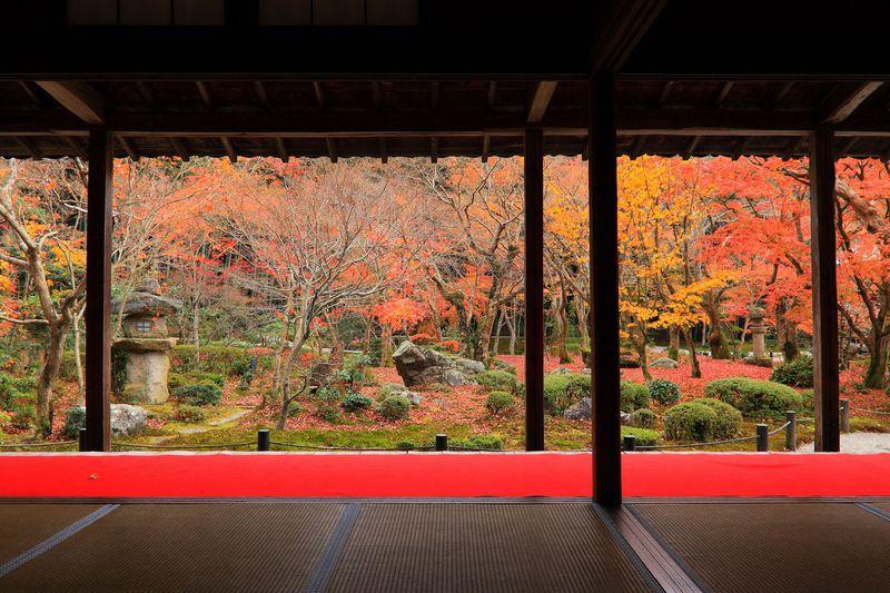 小さい山門とは裏腹!境内に広がる紅葉は絶景!京都「圓光寺」