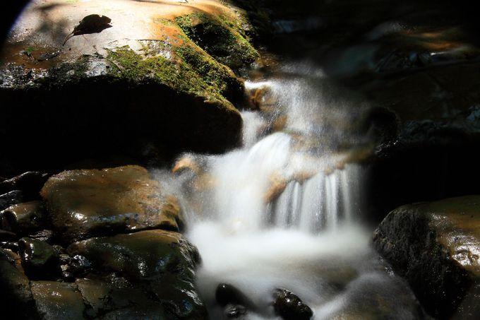 木々が覆い茂る下での湧水群は渓谷であることの証!