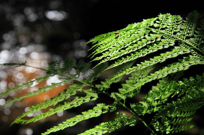 至るところに覆い茂るシダは太陽の光が届かない渓谷を表す