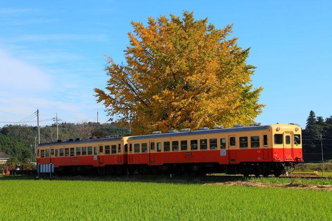 イチョウの木を背景に停車中の列車を撮る「上総久保駅」