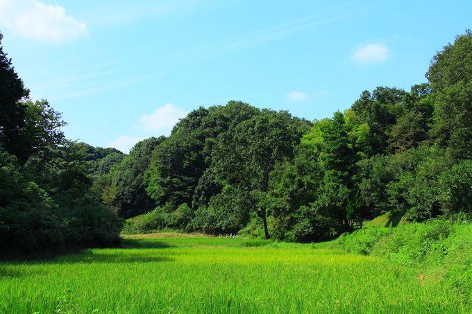 里山に囲まれた水田地帯は懐かしさ漂う田舎の景色!