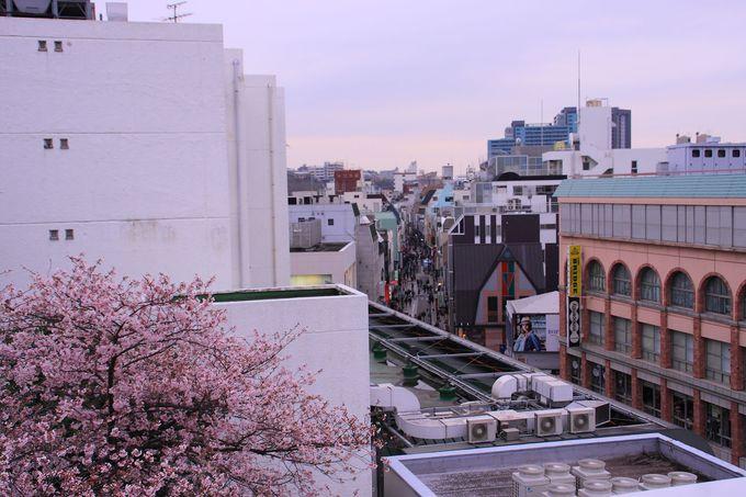 春には桜の咲く姿も!
