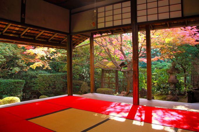 京都の花園に潜む究極穴場紅葉スポット「桂春院」は手入れされた庭園が美しすぎる!