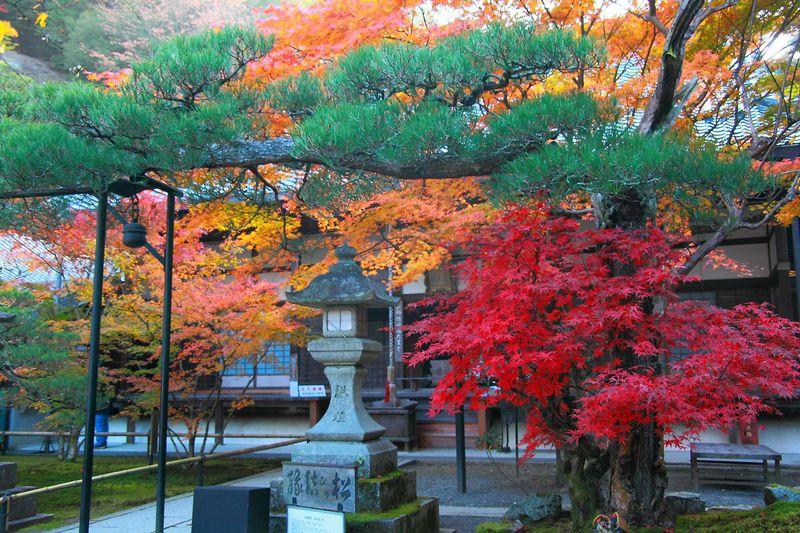 南禅寺の裏手に佇む紅葉の穴場!京都「最勝院高徳庵」