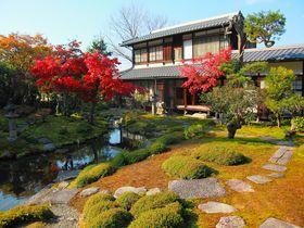 穴場!京都・洛東の片隅にひっそり佇む紅葉庭園「光雲寺」|京都府|トラベルjp<たびねす>
