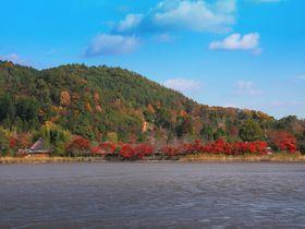 対岸の里山風景に惚れ惚れ!紅葉の季節の京都「広沢池」は開放感抜群!|京都府|トラベルjp<たびねす>
