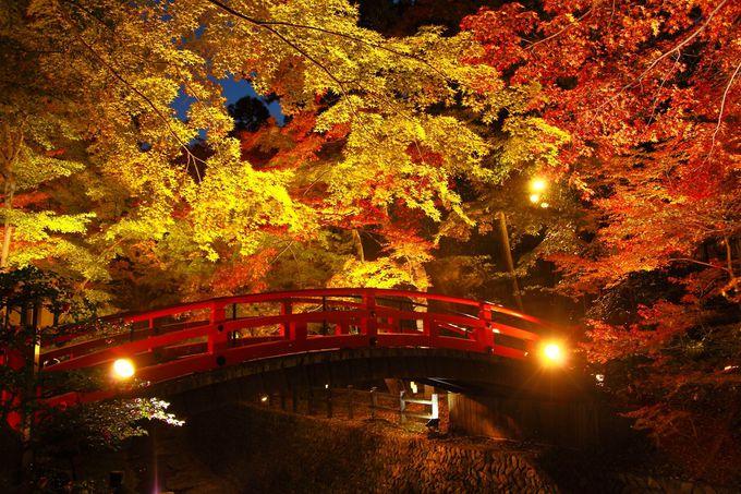 もみじ苑といえば一番人気の「鶯橋」周辺!