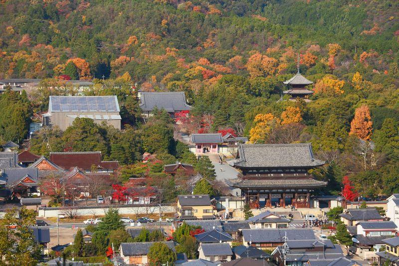 晩秋の紅葉を独占状態!ハイキング気分で登る京都「双ヶ丘」