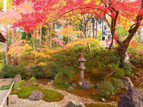 塔頭の紅葉庭園こそ見るべし!京都「栄摂院」は和の芸術!|京都府|トラベルjp<たびねす>