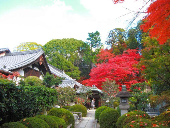 山門をくぐれば本堂横に真っ赤な紅葉が!