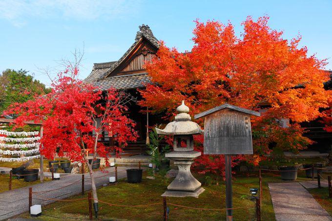 本堂を前にして左右に立ちはだかる真っ赤な紅葉に感動!