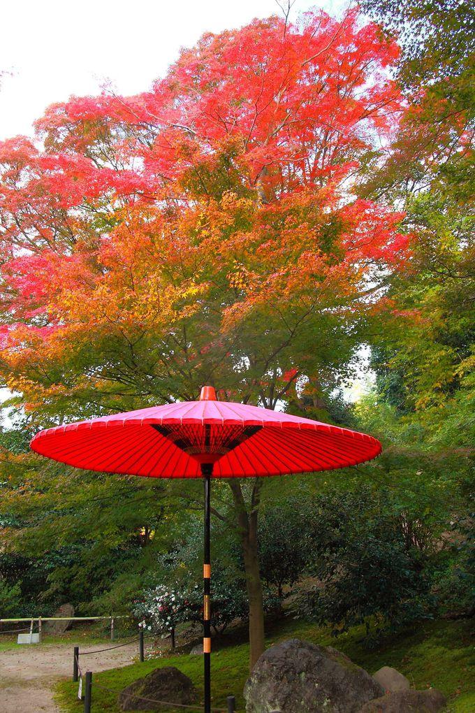 紅葉と真っ赤な和傘のコラボレーションこそ和を彷彿!