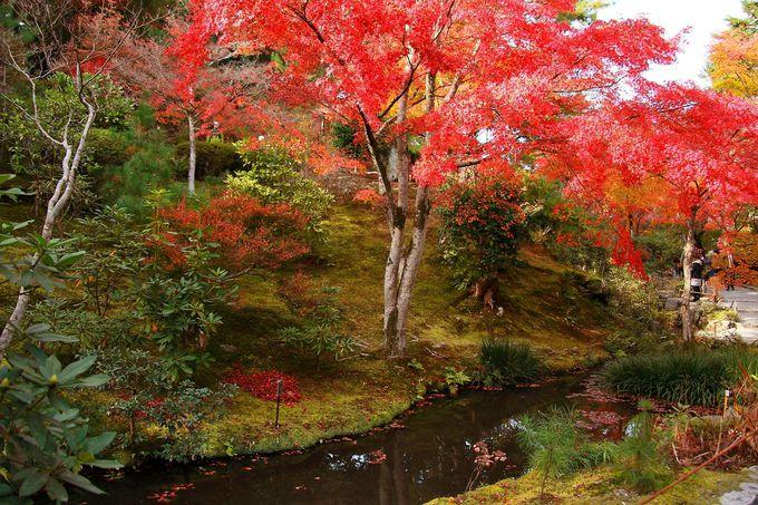 これぞ、ニッポンの紅葉「嵐山」。大人気の天龍寺も攻略!