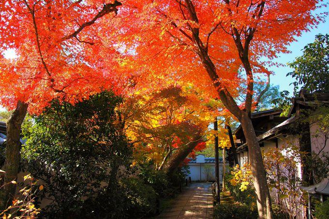 真っ赤な紅葉のトンネルと池泉回遊式山水庭園の紅葉に感動「退蔵院」