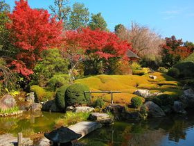 素晴らしい紅葉トンネルと庭園に大絶賛!京都花園の「退蔵院」|京都府|トラベルjp<たびねす>