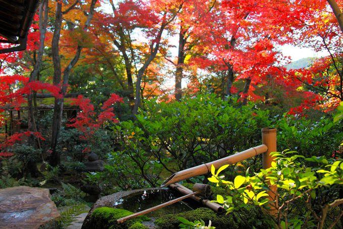 紅葉庭園の見所は南のメインだけではない!南を含めて東西にも注目!