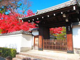 境内散策だけでも十分!晩秋の京都「妙心寺」のオススメ塔頭|京都府|トラベルjp<たびねす>