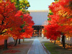真っ赤な紅葉境内に感動!京都西陣の「妙顕寺」は穴場寺院|京都府|トラベルjp<たびねす>