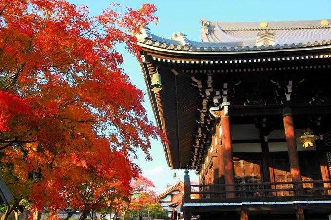本堂と紅葉とのコラボレーションは観光寺院顔負け!