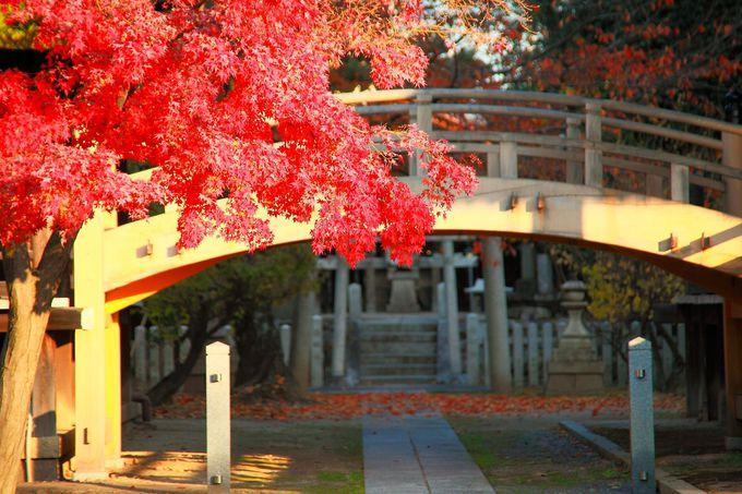 味のある回廊と紅葉のコラボレーションも和の境内を彷彿させる