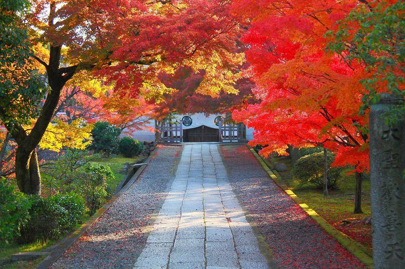 紅葉に燃える参道!京都「養源院」で戦国時代に思いを馳せる