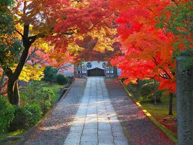 紅葉に燃える参道!京都「養源院」で戦国時代に思いを馳せる|京都府|トラベルjp<たびねす>
