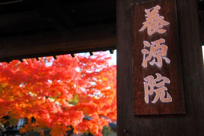 山門をくぐる前から燃えるような紅葉を体感!