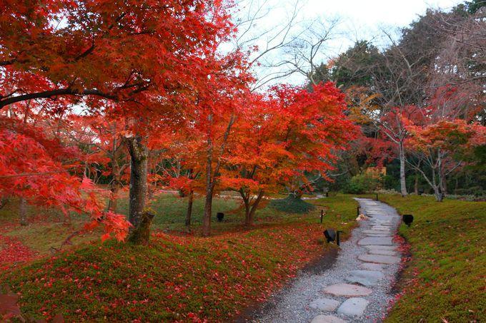 境内散策路には真っ赤な紅葉の木がたくさん植えられている!