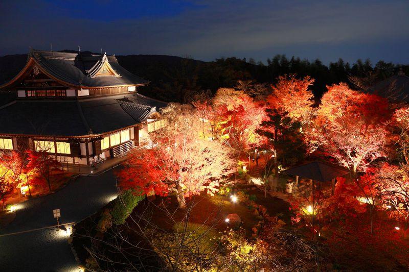 期間限定!息を呑む美しさの紅葉ライトアップ 京都「青蓮院大日堂」