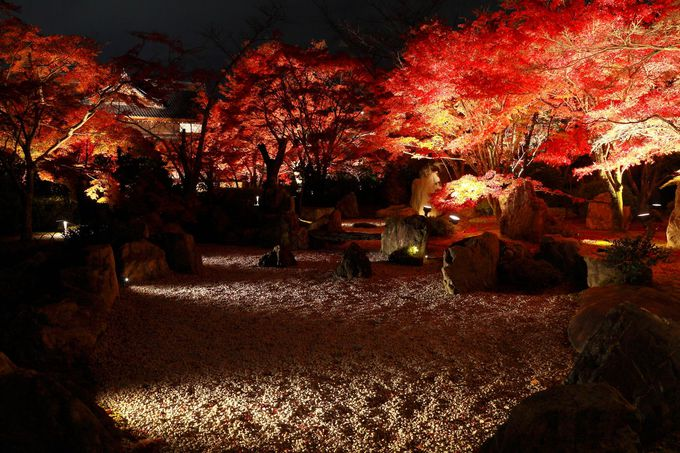 期間限定!息を呑む美しさの紅葉ライトアップ「青蓮院将軍塚」