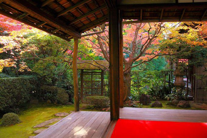 茶室にて抹茶を頂きながら晩秋の庭園をゆっくり眺める