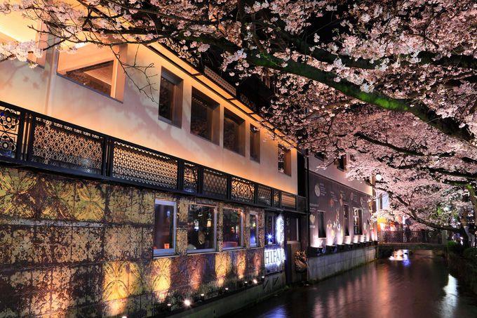 中には今時のおしゃれな建物沿いに咲く桜も!