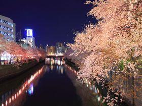 豪華絢爛すぎの夜桜に気分上々!横浜中心部「大岡川」プロムナード|神奈川県|トラベルjp<たびねす>