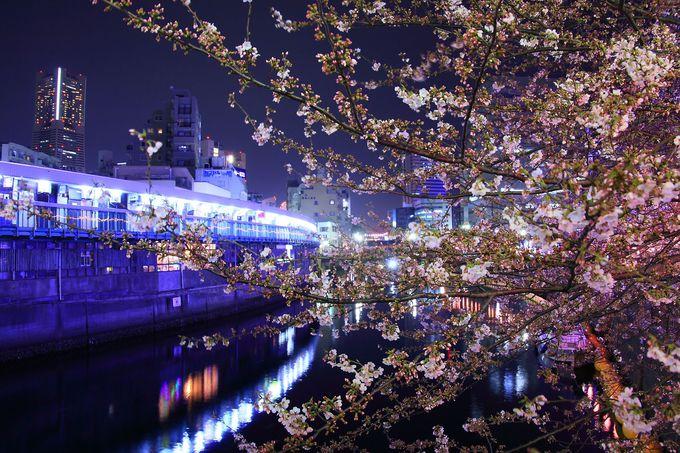 昭和レトロな一角!「都橋商店街」と夜桜のコラボ